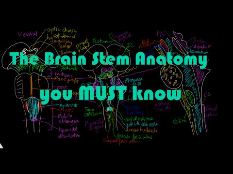 Brain stem Anatomy #1 - All the major structures you MUST know