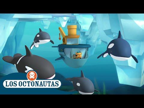 los-octonautas-oficial-en-español---patrulla-orca