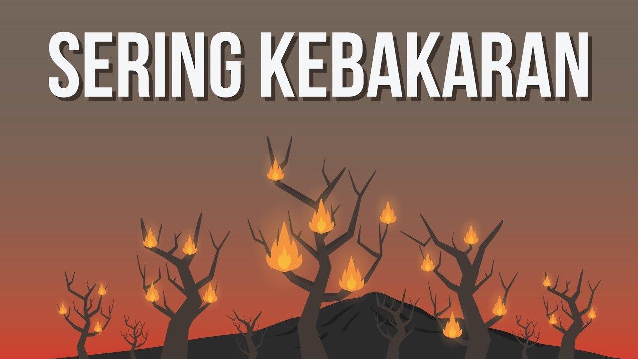 Kenapa Indonesia Sering Kebakaran Hutan?