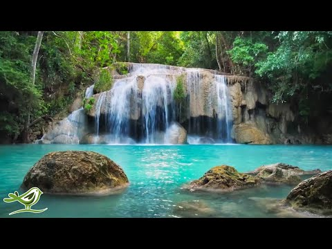Relaxing Piano Music 247: Study Music, Relaxing Music, Sleep Music, Meditation Music