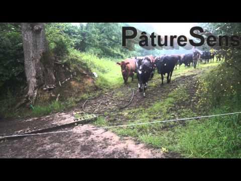 Erwan Le Roux - Éleveur laitière Bio 100% à l'herbe interview avec PâtureSens