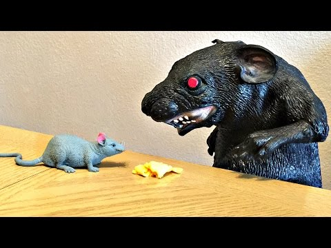 Huge Rat and Mouse in House!  Rodent Kids Toys Attack Short Kids Movies Video