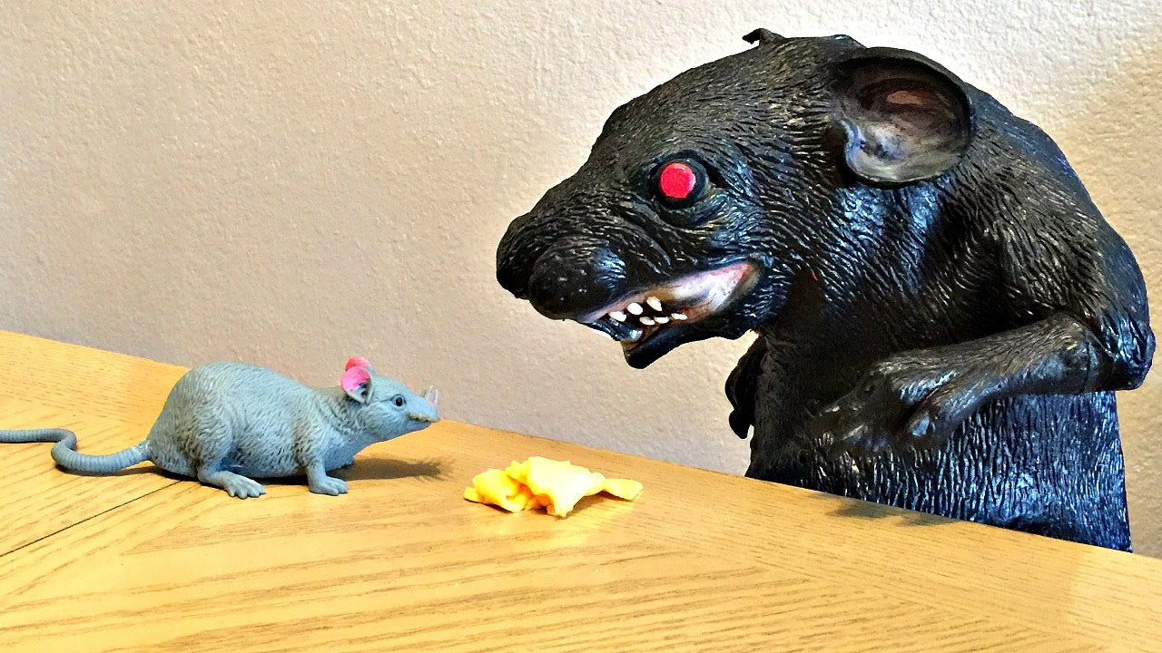 Huge Rat and Mouse Attack Toddler!  Rodent Kids Toys