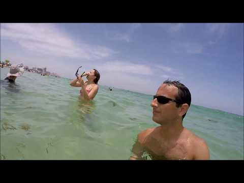 Swimming With A Shark And Other Fishes In South Beach