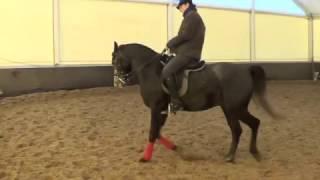 Конный спорт обучение. Обучение менке ног. Кизимов Михаил.