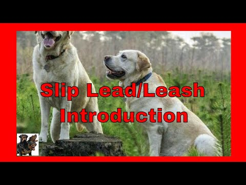 Slip Lead Introduction