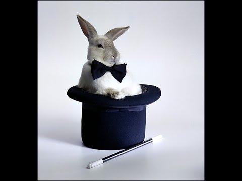 Фокус с кроликом в шляпе. Узнай как он делается.