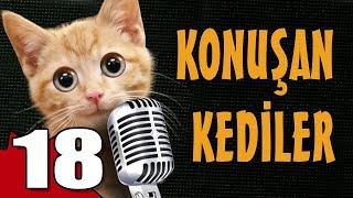 Konuşan Kediler 18 - En Komik Kedi ları