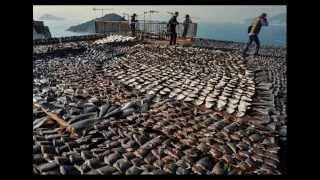 Pacific Ocean endangered species