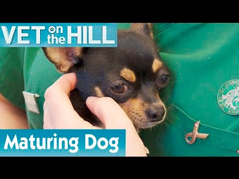 🐶 Is This Dog Ready For Pregnancy? | FULL EPISODE | S01E08 | Vet On The Hill