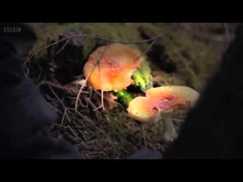 The Magic Of Mushrooms