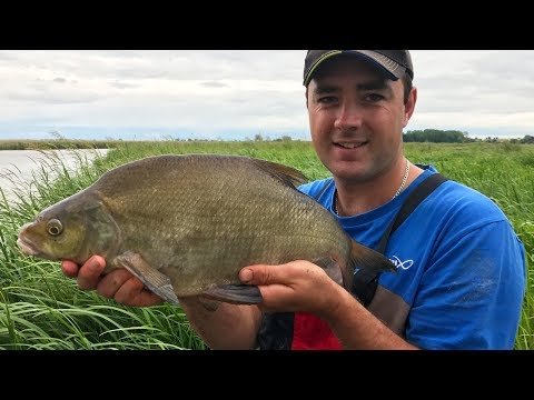 Big River Feeder Fishing - Bootlaces, Skimmers & Slabs!