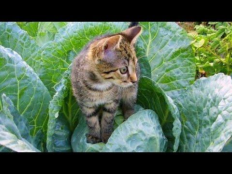 Вопрос: Какую траву не любят кошки?