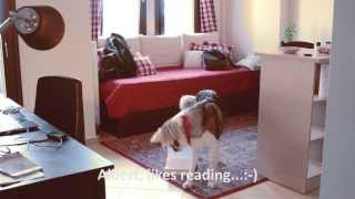 "Teach Your Dog Advanced Behaviors: Reverse, Position Changes, Left Turns, Center Using ""place"""
