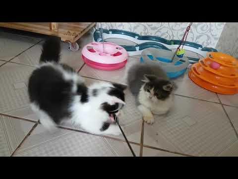 Perawatan Kucing Usia 2 Bulan Yang Makannya Sedikit.