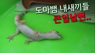 집돌이 애완뱀 도마뱀 위험할뻔 파충류 키우기