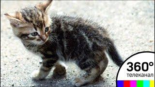В Полоцке милиционера уволили за то, что он пнул котенка