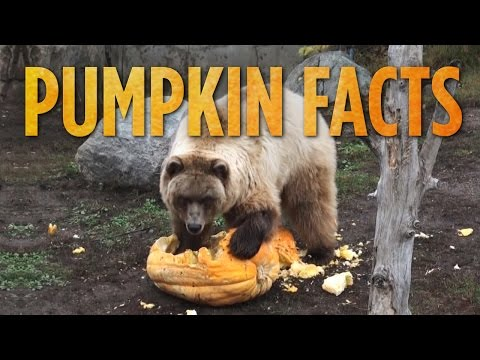 Video image: Facts about pumpkins you never knew