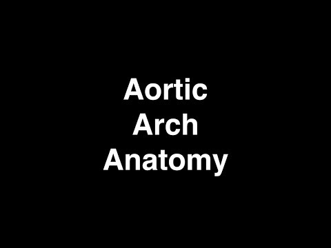 Anatomy Of The Aortic Arch And Its Branches Youtube