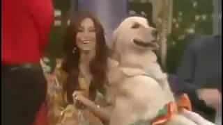 Танец с собакой
