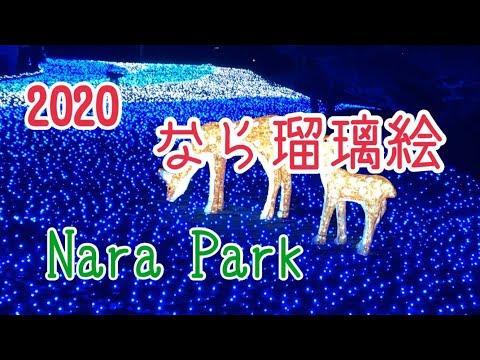 【Nara】2020!しあわせ回廊なら瑠璃絵✨IN奈良公園