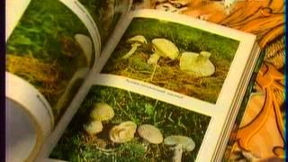 Диетолог Скачко (Украина). Правильное питание грибами без отравления грибами? 067-992-40-62(Школа здравого смысла. Диетолог, доктор Скачко Борис, Киев, Украина Правильное питание грибами это если..., 2012-10-22T19:39:05.000Z)