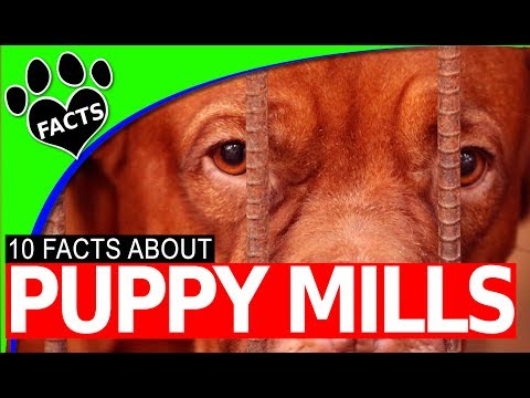 10 Puppy Mill Facts and Figures 2017 #stoppuppymills #Dog #puppy