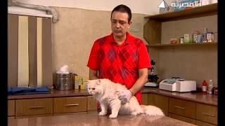 كيفية إختيار القطط
