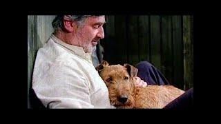 Приключения рыжего Майкла детское кино про собаку