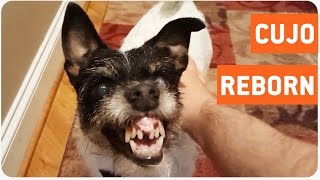 Dog Makes Scariest Face Ever | Man's Best Friend