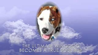 WINGDOG: SOUL PUP Book Trailer