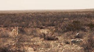 Scene taken from Predator Pursuit with Jeff Thomason.
