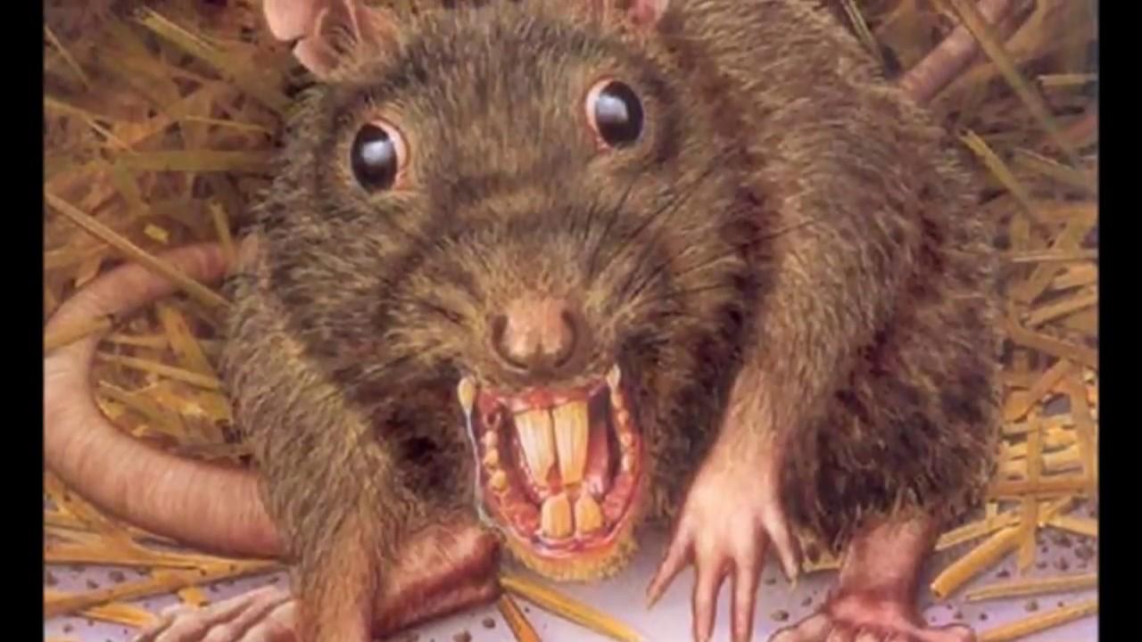 Хоррор.Крысинг #20 ферма Night Rat. Night Vision - YouTube