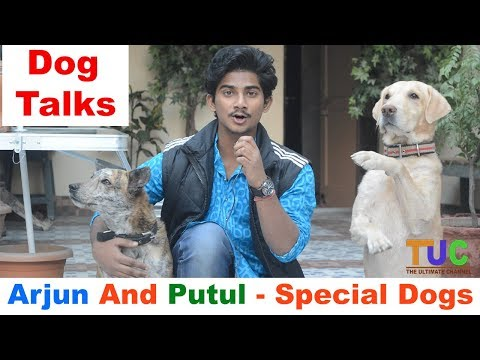 Special Dogs Arjun And Putul And Their Owner Ajay Chatterjee | Dog Talks | The Ultimate Channel