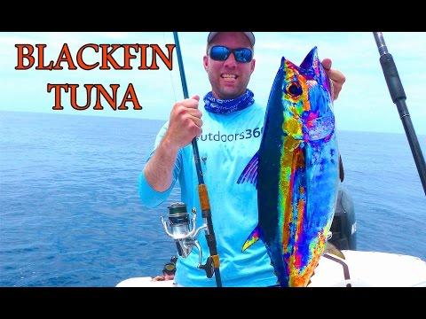 Blackfin tuna on a Shimano Stradic 4000FK