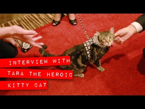 Interview with Tara, the Heroic cat.