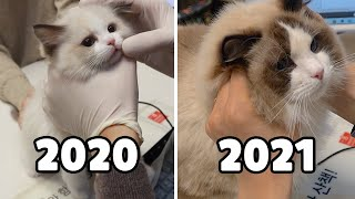 [2020 vs. 2021] Quintuplet Kittens' Annual Vaccination Day