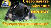На zoo. By можно купить щенка. Фото и видео-объявления по продаже собак и щенков.