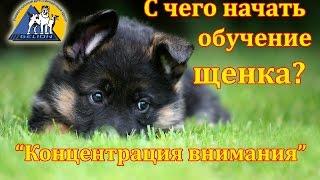Урок №1 Начальное обучение щенка. Первые шаги