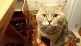 Взорвал интернет! Кот разговаривает, говорит жрать мама МАаа МАааа :(( Вы помните это? Фейк.