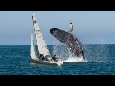Yachts and Boat Fails compilation ✦ Crazy Boat Crashes Caught on Camera