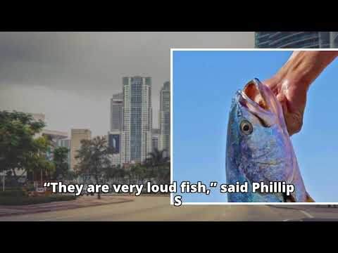 Biologists record the machine-gun sound of the loudest known fish
