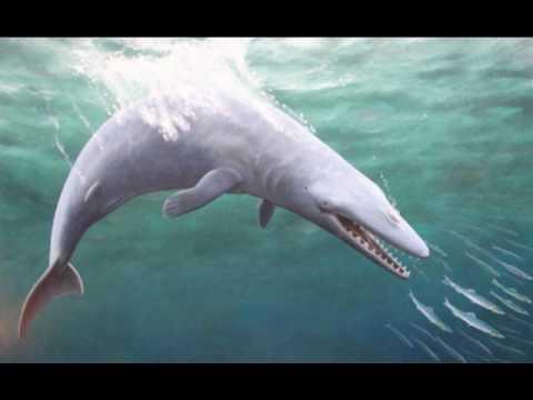 Prehistoric Whales - YouTube
