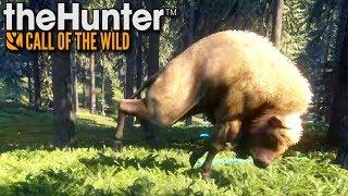 Żubry mnie atakują | theHunter: Call of the Wild (#6)
