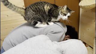 少しずつ息子に心を開く猫