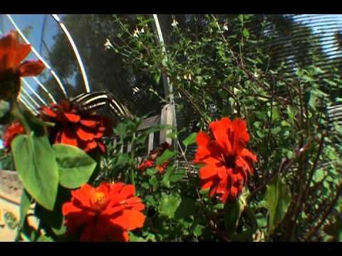 Santa Barbara Museum Of Natural History Butterflies Alive