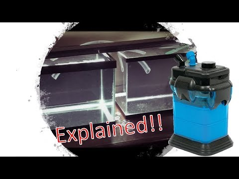 ONE CANISTER FILTER AND TWO TANKS EXPLAINED