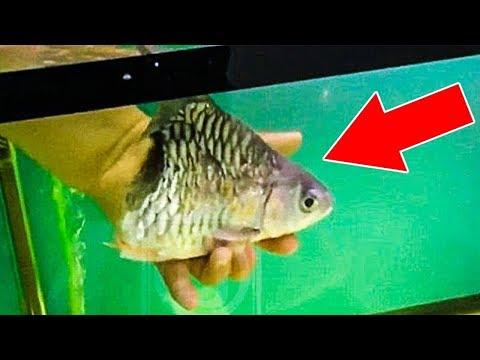 Kaydı Olmasa Asla İnanmayacağınız 6 Mutant Balık