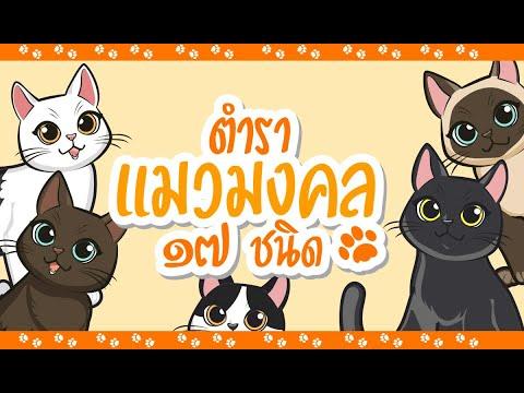 แมวมงคล 17 ชนิดของไทย จากตำราสมุดข่อย