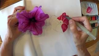 Sketch a simple petunia